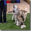 nuprol-tactical-dog-vest-tan-p7630-12681_image